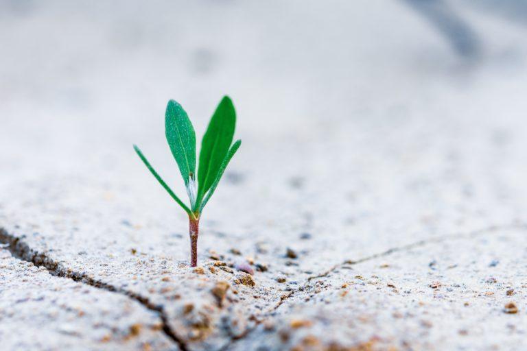 Pflanze wächst aus Boden